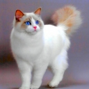 Ragdoll_cat_3