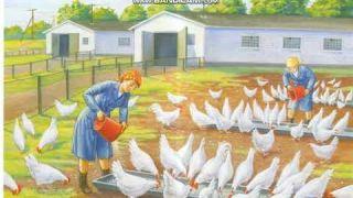 Профессия: Птицевод